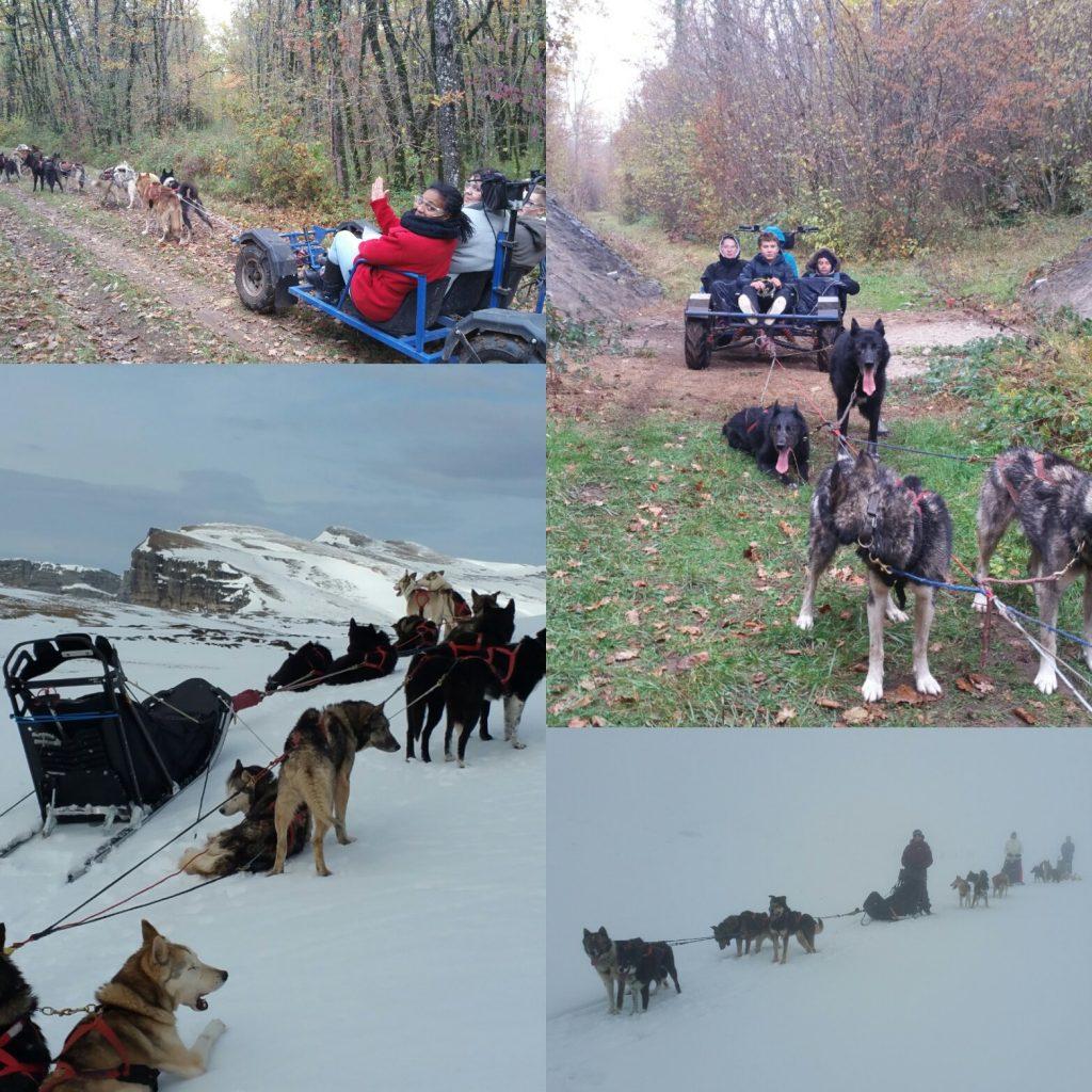 Inscription newsletter chien de traineau dans le vercors ou en Charente